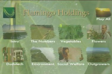 Flamingo Holdings